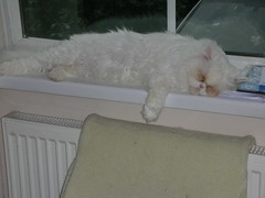 photo of happy relaxed cat asleep