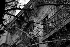 (Lolita *) Tags: city bw tree byn blanco arbol casa negro bn palomas balcon palomita ramas 20110708img43541up