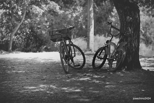 Las bicicletas si son para el verano......