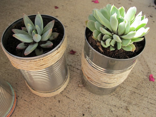 First set of tin can planters #2