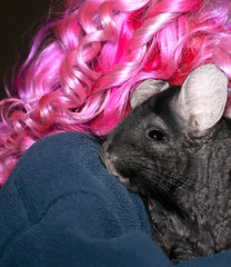 Day 234 of 365 - Year 2 (wisely-chosen) Tags: selfportrait me july chinchilla midnight canon50mmf18 pinkhair cameraraw 2011 365days lavenderhair naturallycurlyhair canonspeedlite430exii extradarkebonychinchilla curlformers adobephotoshopcs5extended redkensmoothdownbuttertreatment onenonlyarganoiltreatment infusium23repairologieleaveintreatment