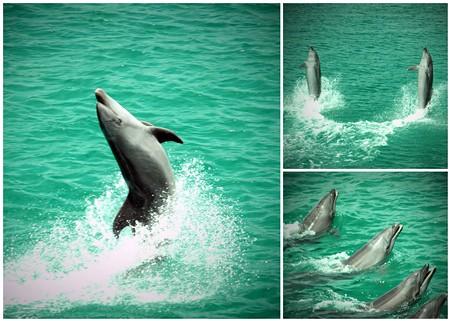 ocean-adventure_dolphin-show