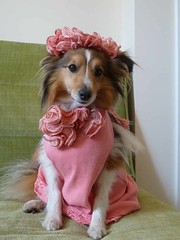 """Pretty in pink • <a style=""""font-size:0.8em;"""" href=""""http://www.flickr.com/photos/55880040@N05/5967788082/"""" target=""""_blank"""">View on Flickr</a>"""