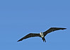 From Captain Doug Maple's Tidewater Tour, this bird was spotted on the Seahorse Key's Garner Poin...