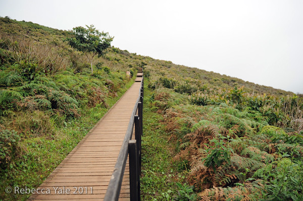 RYALE_Galapagos-262