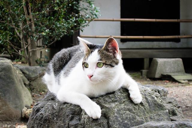 Today's Cat@2011-07-24