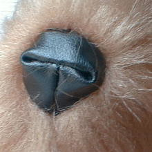 nose[1] (Ateliê Mineiros e Mineirices) Tags: de basset pap tecido