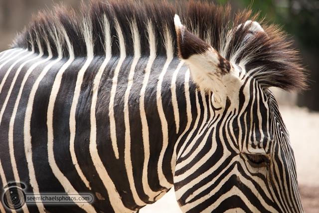 San Diego Zoo 72411 © Michael Klayman-005