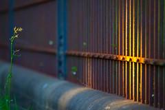 Fence (96dpi) Tags: fence rust zaun rost corrosion