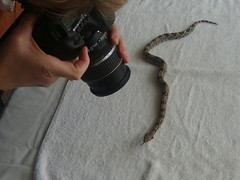 Schlangenbaby fotografieren