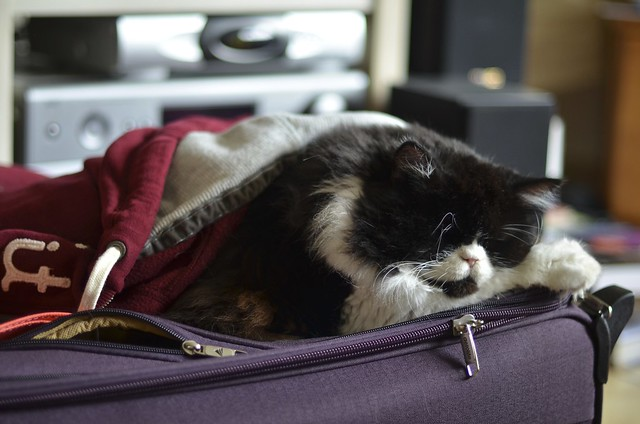 He loves suitcases. And Hoodies