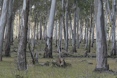 "Forest near the Grampians, Victoria • <a style=""font-size:0.8em;"" href=""http://www.flickr.com/photos/44919156@N00/5983408537/"" target=""_blank"">View on Flickr</a>"
