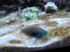 Newport Aquarium 117 (foodbyfax) Tags: newportaquarium