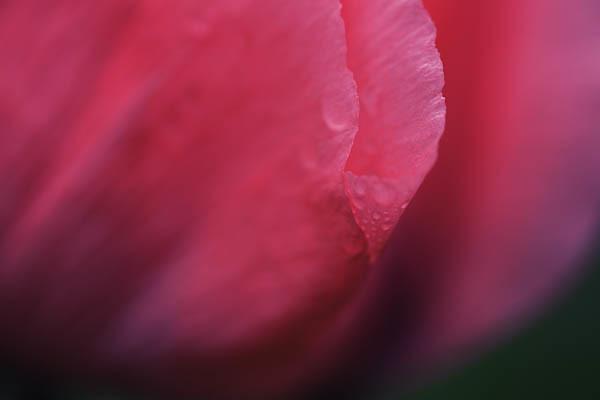 Poppy - Bi-color Filter