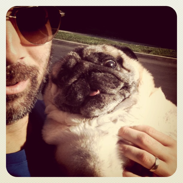 Bebop loves his daddy #pug #love