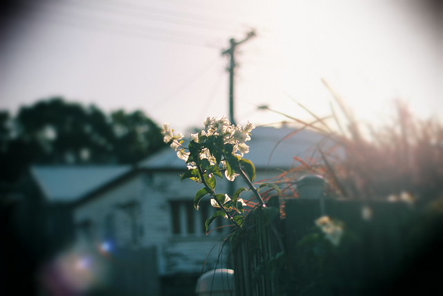 late afternoon flower