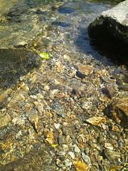 笹舟の写真