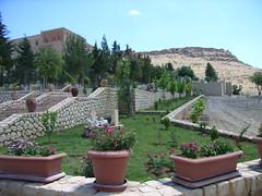 "Blumen im Kloster Zafaran • <a style=""font-size:0.8em;"" href=""http://www.flickr.com/photos/65713616@N03/6008478887/"" target=""_blank"">View on Flickr</a>"