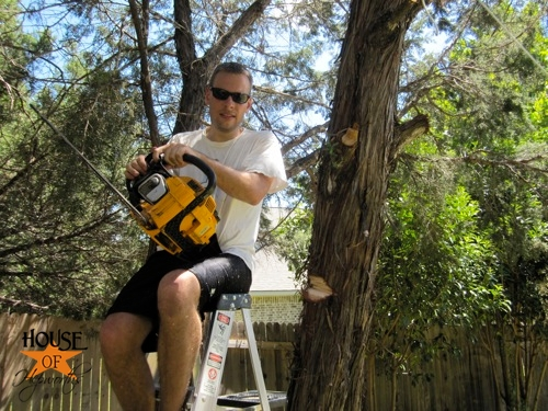 yard_work_tree_cutting_05