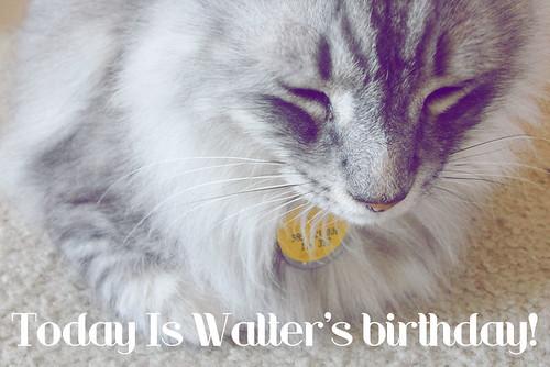 Birthday Kitty...