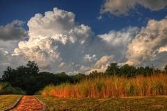 Wetlands & Clouds