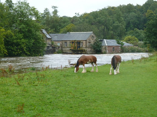 Clydesdale Horses at Pollock Park