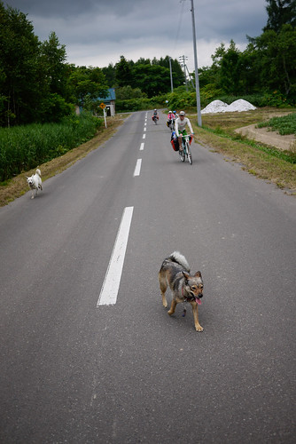 Friendly dogs near Makkari, Hokkaido, Japan