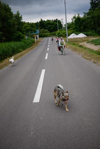 Friendly dogs near Makkari, Hokkaido, Japan