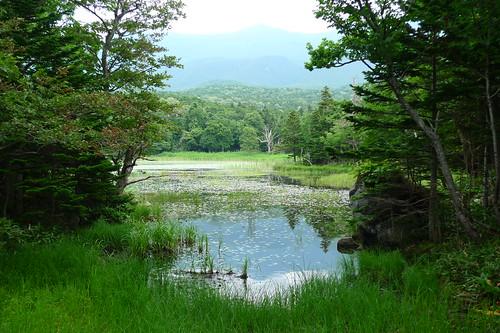 知床五湖、これは二湖か。
