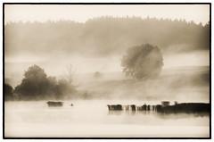 The Angler (warmianaturalnie) Tags: morning mist lake fog boat explore poranek angler mgła łódka jezioro wędkarz