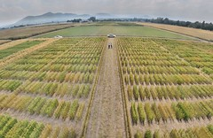 Experimental plots in wide angle at CIMMYT El Batn (CIMMYT) Tags: people plant planta field mxico mexico experimental view gente wheat experiment headquarters line staff research breeding vista campo agriculture synthetic plot sede improvement scientist trigo experimento researcher researchcenter empleado agricultura parcela lnea researchstation investigacin cientfico elbatn experimentstation cimmyt investigador gigapan mejoramiento centrodeinvestigaciones estacinexperimental estacindeinvestigacin synttico widecrosses cruzasamplias