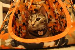 Maggie relaxing in her tent