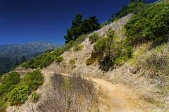 Sea Cliff Trail - Muir Woods (dhoang2381) Tags: sea cliff woods tokina trail muir 1116mm d7000