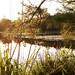 Pine Pond, Roman Forest