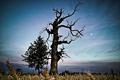 Dead Tree (morten almqvist) Tags: blue sunset moon tree dead republic czech sigma foveon dp1s mysliborice