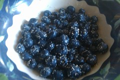 Blueberries in bread crumbs full