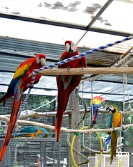 Bath time for the macaws. (RLBrinkman~in and out-mostly out) Tags: birds aviary pars macaws