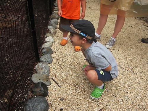 Ezra checks out the little deer