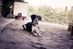 """Los, nun wirf schon das Stckchen"" (pkuhnke) Tags: dog 35mm sweet perro hund brav ss"
