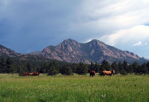 Photo - Horses and Mountains