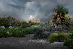 Storm in the Desert (h_roach) Tags: storm nature clouds photoshop outdoors
