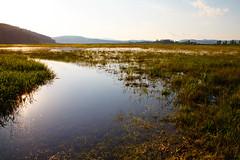 Wet (Karmen Smolnikar) Tags: plants sun lake reflection nature wet water evening slovenia slovenija intermittent cerknica