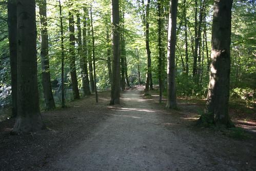 Waldweg am Libellensee
