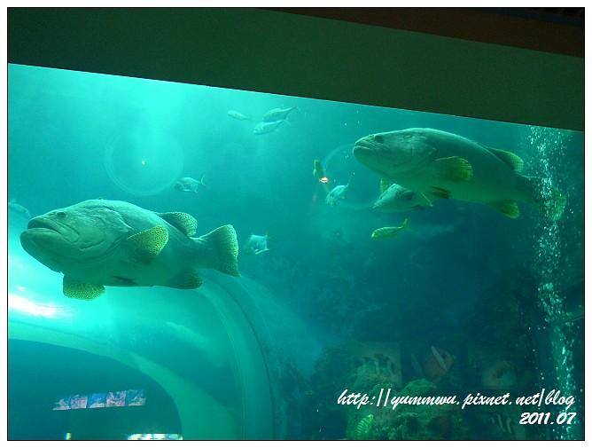 110711小丑魚主題館 (33)
