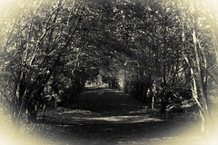 Eerie Tree Archway (Paul McCreaddie) Tags: trees cemetry globe nine arches motherwell lanarkshire bellshill forgewood