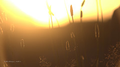 Sunlight exposure (Vicktor Abrahams) Tags: city light vacation sun sunlight art 20d canon exposure candle clear easy flimsy hoogeveen lightly weak 135mm easily mild slightly floaty lightweight vicktor illuminating glim facile insubstantial bramsivic toilless