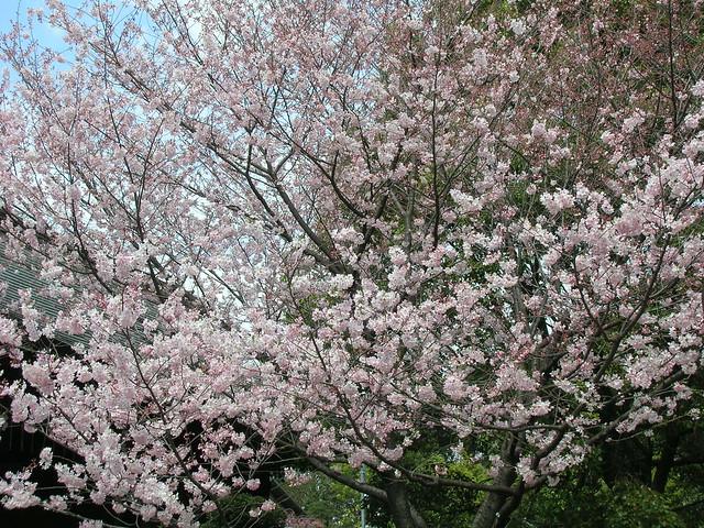 d7-09-ueno-park