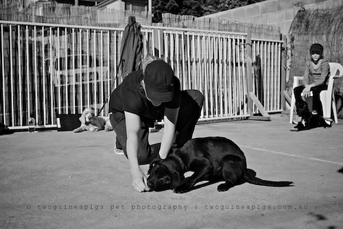 twoguineapigs pet photography documenting amy puppy trainer in puppy class.