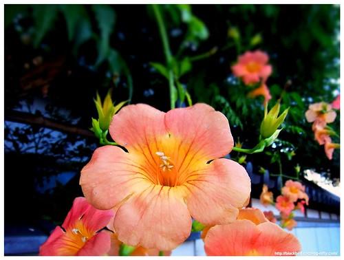 Flowers #01