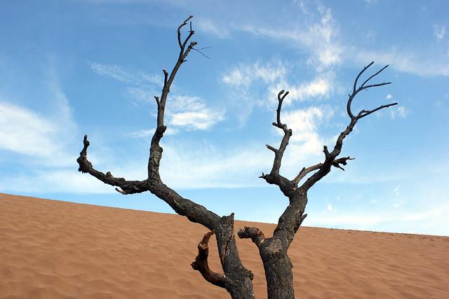 The Dunes 4